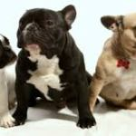 Puppies For Sale: What To Look For When Buying A Puppy