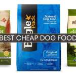 The Best Dry Dog Food of 2018-19