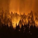オレゴン州イーグルクリークの山火事は八王子の面積が焼失!花火を投げ込んだ犯人に賠償金40億円の判決。被告の名前や素性は?罪は10年で免除される?