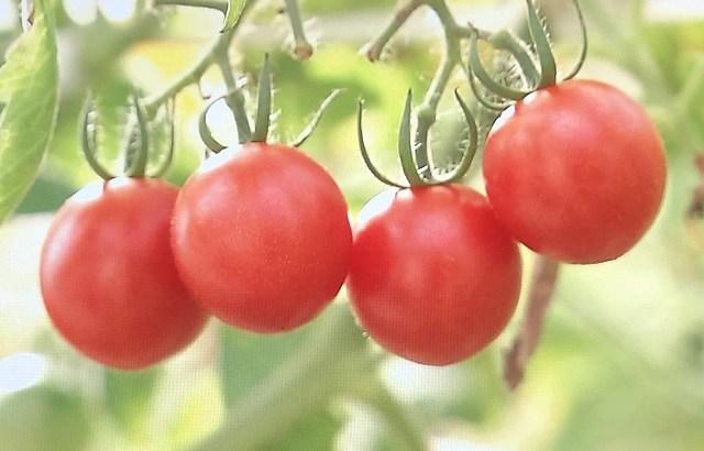 OSMICアグリコミュニティという次世代農業のテーマパークが凄い!糖度11のオスミックトマトもここで生産される。オープンが楽しみだ。