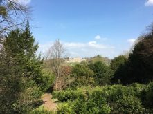 Buzymum - view towards Cliveden Manor from the woodlands