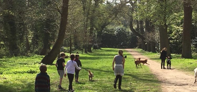 The Best UK Woodland Walks