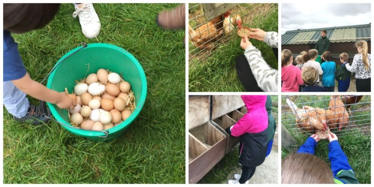 Buzymum - Feeding chickens and egg collecting at Odds farm