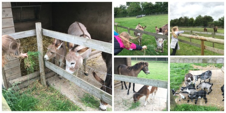 Buzymum - Meeting the animals at Odds Farm