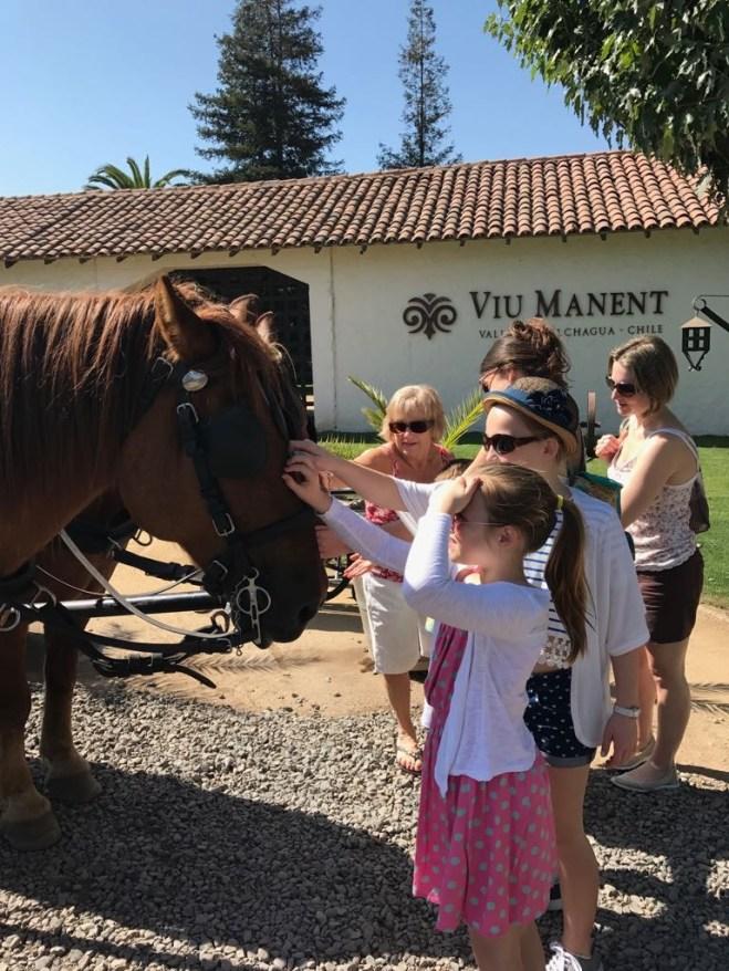 Buzymum - Meeting the horses at the vineyard