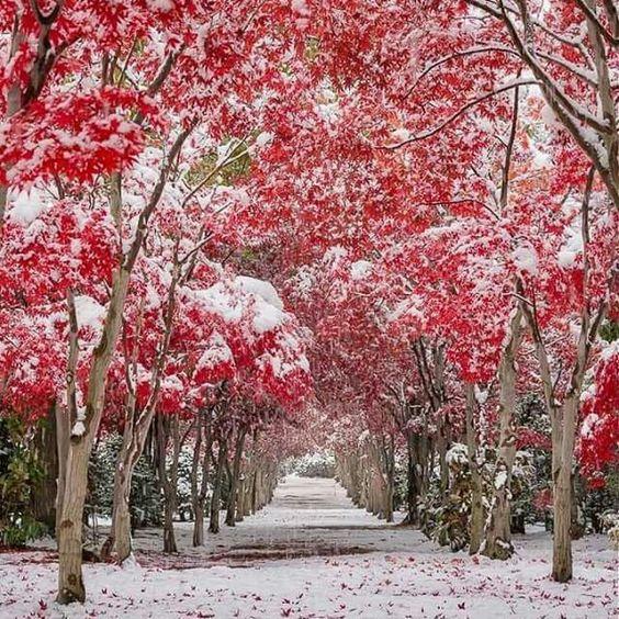 Travel n Snow