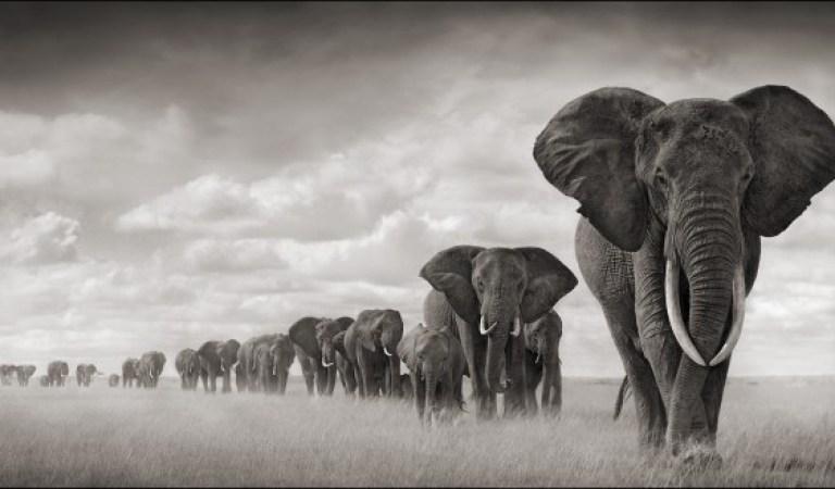 Fillerin İnanılmaz Zeki Olduklarını Kanıtlayan 10 Davranış Biçimi