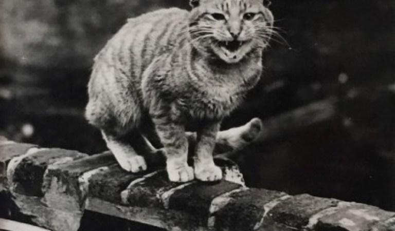 1950'lerden İnsanı Müthiş Bir Zaman Yolculuğuna Çıkaran Fotoğraf Serisi: Londra'nın Kedileri