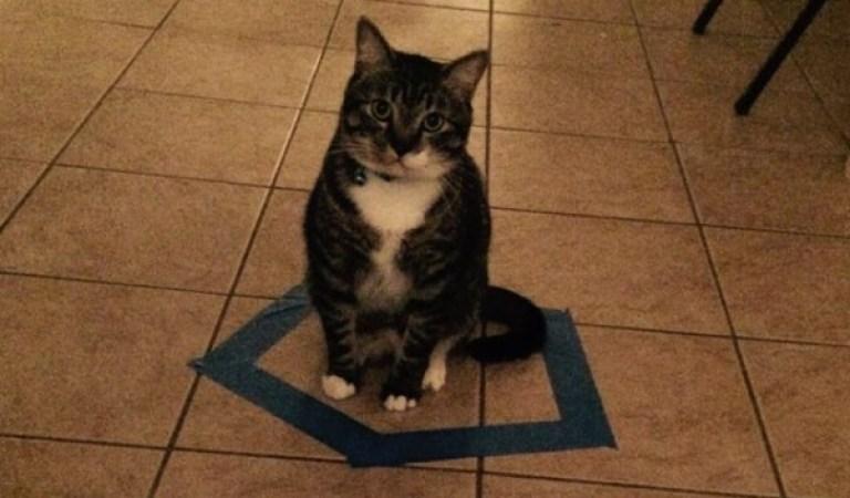 Kedi Severler Arasında Yükselen Yeni Akım : Çemberdeki Kedi Deneyi