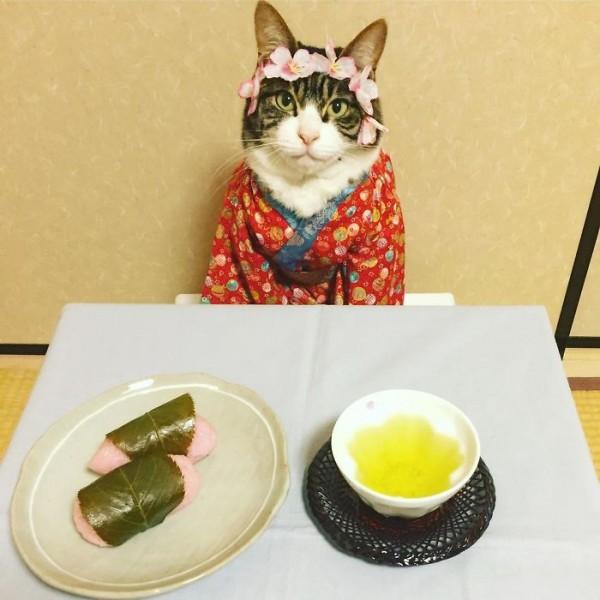 dining-with-dressed-cat-maro-japan-48-58f46b258b879__700