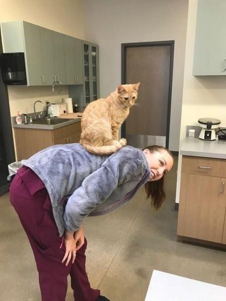vet-office-cat-calms-patients-ron-8