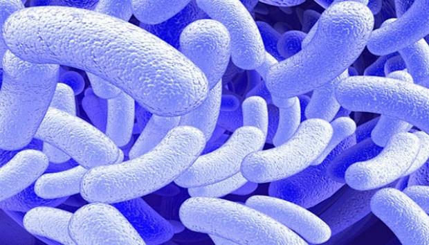Bilim İnsanları Bakterinin DNA 'sına GIF Eklediler!