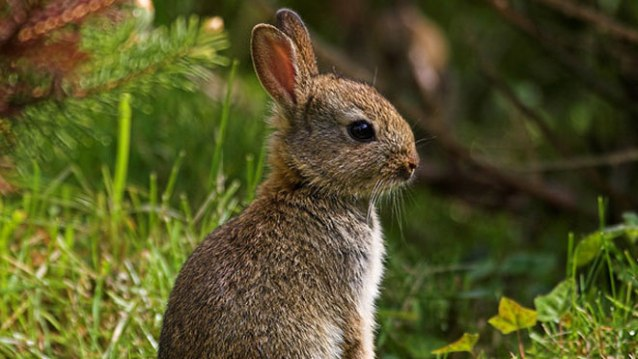 young rabbit facts