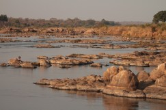 Catching last rays of day with the hippos of Southern Kruger