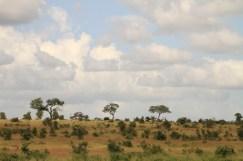 hillside in Kruger