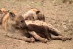 Cubs on the milk brigade