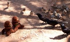 otters meet birds