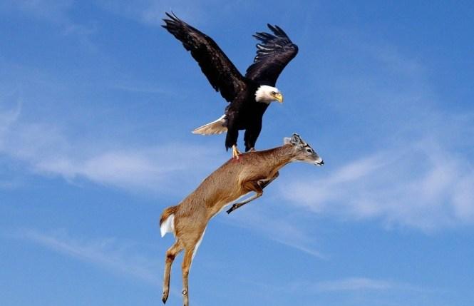 Officials Offer 10 000 Reward For Information On Dead Eagles
