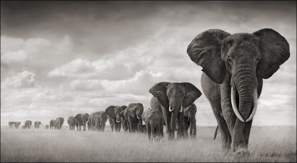 10. Fillerin diğer yetenekleri