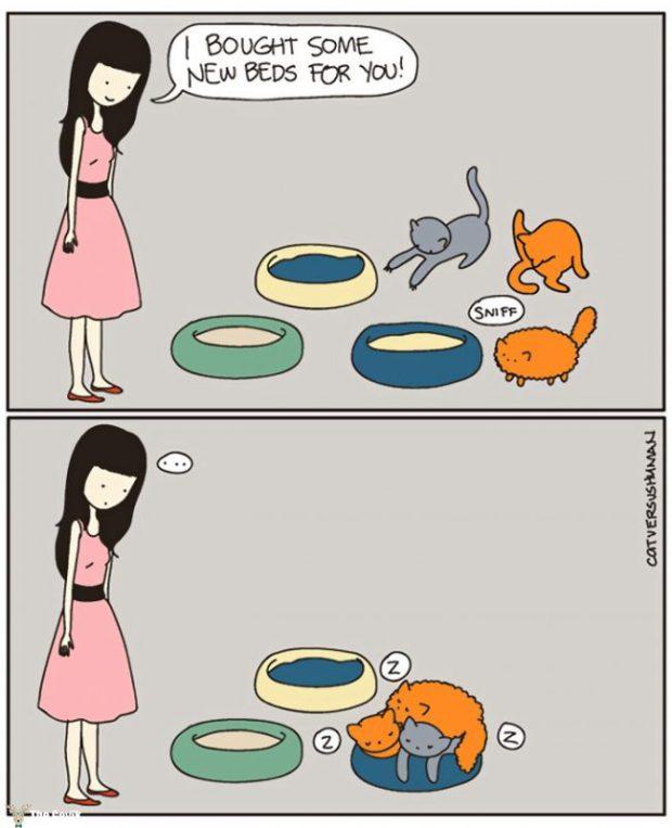 kedi13