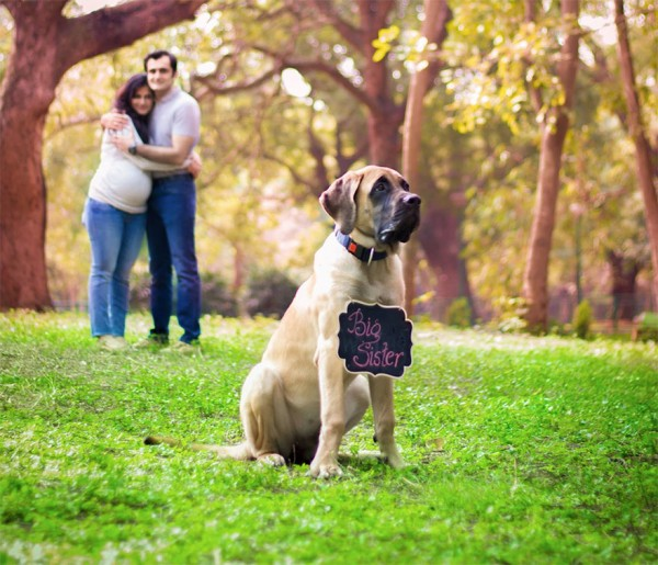 pregnant-couple-dogs-photoshoot-6-1
