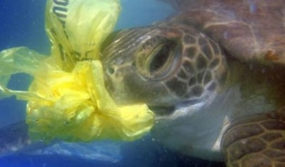 save-the-sea-turtles-e1385450811998