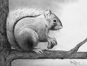 easy drawing drawings cool try simple sketch pencil animal beginners buzzhippy animals discover