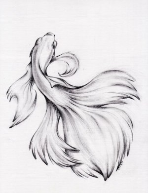 pencil drawings drawing fish easy animals simple charcoal fighting betta water sketches animal beginner sketch siamese dance tattoo dessin draw