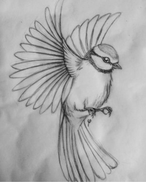 simple pencil drawings easy animals beginner every source