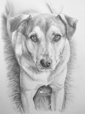 pencil easy drawings animals simple beginner every source