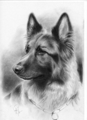 pencil drawings easy animals drawing simple german portrait realistic shepherd commission pet dog stunning animal dogs shepherds sketches disegni beginner