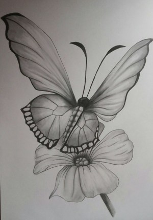 pencil drawings easy butterfly simple drawing flower animals draw tattoo sketch flowers butterflies roses sketches animal artist tattoos unknown single