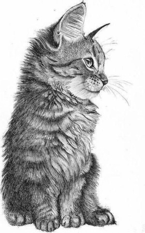 drawings pencil easy simple animals beginner every source