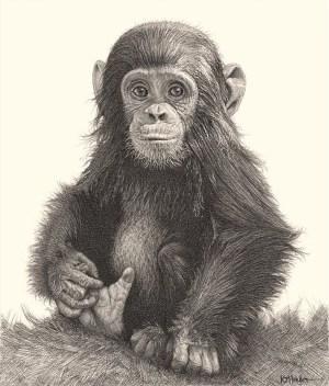 pencil drawings animals easy simple beginner every