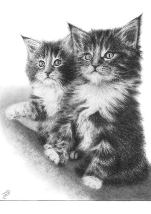 pencil drawings animals easy simple beginner every source