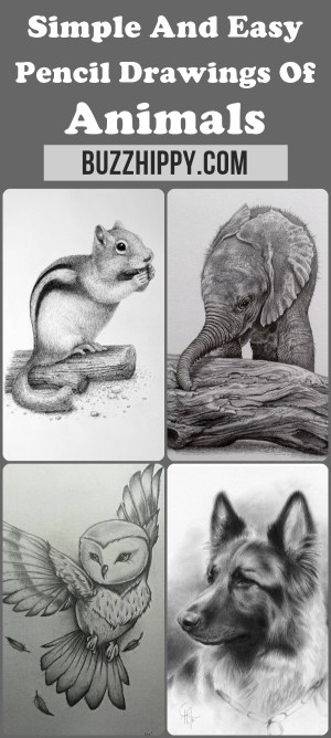 easy animals drawings pencil simple drawing beginner animal draw every hippy buzz