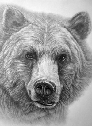 pencil drawings easy animals animal simple bear drawing sketches grizzly tattoo draw bears tattoos realistic beginners beginner artists oso wild