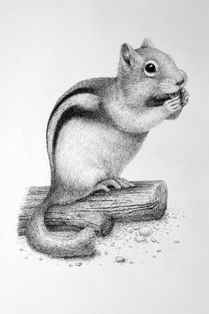pencil drawings easy animals ink simple squirrel animal drawing pen wildlife sketches stippling realistic rens draw beginner buzzhippy painting every