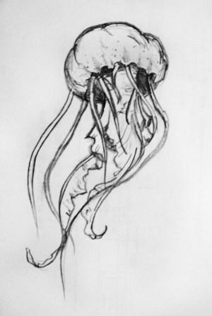 pencil drawings drawing animals simple jellyfish realistic easy underwater sketch sketches deviantart tattoo tattoos animal coral creatures beginner google reef