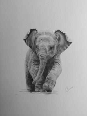 pencil drawings easy animals simple elephant drawing beginner source every a3 guardado desde