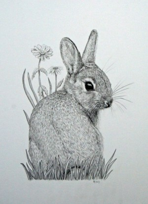 pencil drawings easy animals simple beginner every source