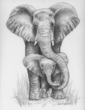 pencil drawings easy animals simple beginner source every
