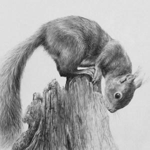 pencil drawings easy animals simple wildlife graphite animal realistic beginner pencils visit happy