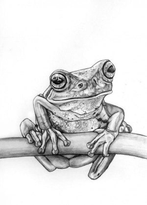 pencil drawings easy drawing sketch sketches simple animals frog tree animal realistic cool draw tattoo beginner frogs sketching rachelle drawn