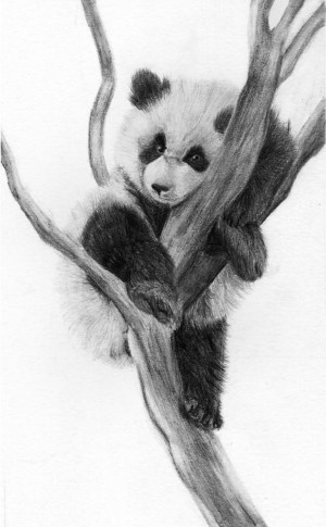 panda pencil animals deviantart drawings fox drawing easy simple bear dessin realistic animal draw sketches pandas sketch painting comment animaux