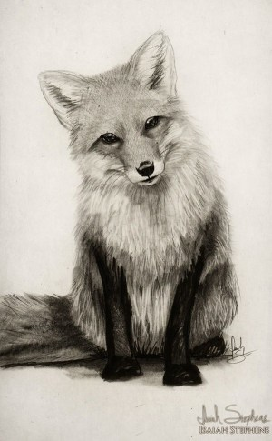 easy drawings pencil simple animals beginner every source
