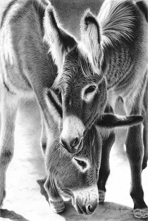 pencil animals drawings drawing donkey easy animal simple jack jill realistic glynnis miller horses pets horse wildlife draw connell farm
