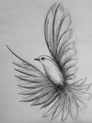 pencil drawings easy animals drawing simple sketches bird draw birds flying sketch animal beginner amazing flower faces flowers colorful visit
