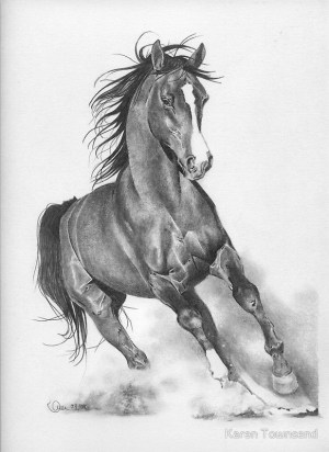 pencil drawings drawing animals horse sketch horses easy simple animal sketches dessin cheval beginner realistic deviantart warriors pride chevaux croquis
