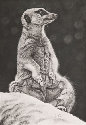 pencil animals meerkat drawings easy simple drawing ashleigh dix animal sketches beginner wildlife charcoal every source graphite